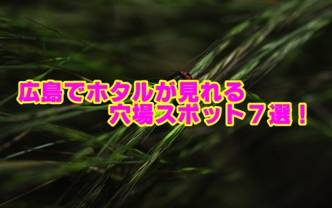 広島県のホタルの見頃と穴場スポット7選!観賞のポイントも確認!