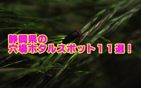 静岡県のホタルの見頃と穴場スポット11選!観賞のポイントも確認!
