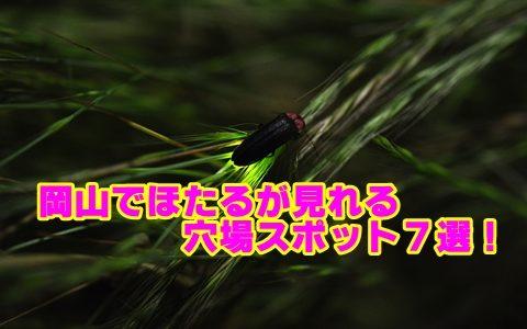 岡山県のホタルの見頃と穴場スポット7選!観賞のポイントも確認!