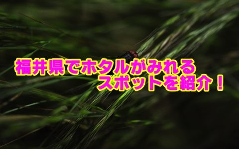 福井県のホタルの見頃と穴場スポットを紹介!観賞のポイントも確認!