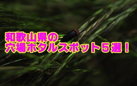 和歌山でホタルが見れる穴場スポット5選!観賞のポイントも確認!