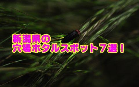 新潟県のホタルの見頃と穴場スポット7選!観賞のポイントも確認!