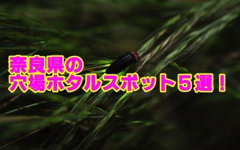 奈良でホタルが見れる穴場スポット5選!観賞のポイントも確認!